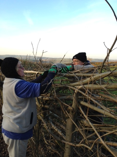 Hedging at Ty Canol